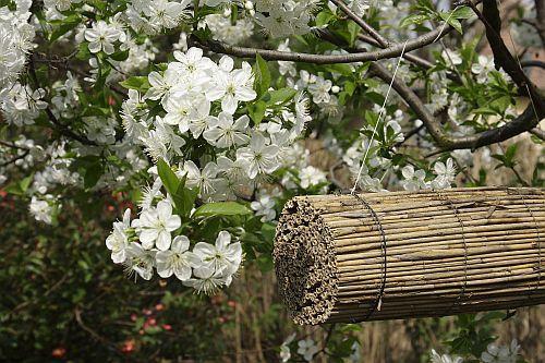 darázs, méh, fészek