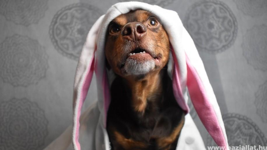 Csokinyuszi helyett házilag készült kutyasüti húsvétra