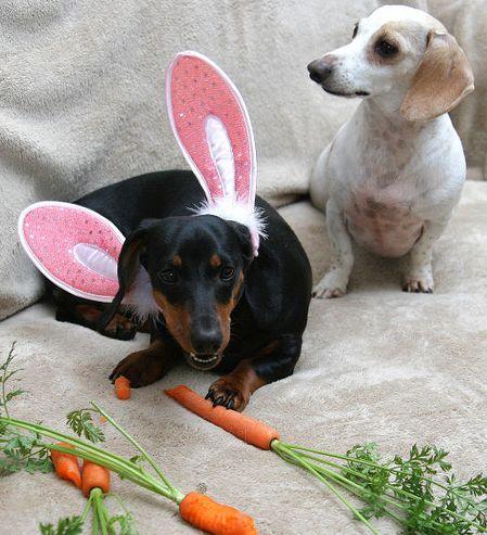 kutya, húsvét, nyuszi
