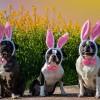 Minek örülnek húsvétkor a cicák és a kutyák?