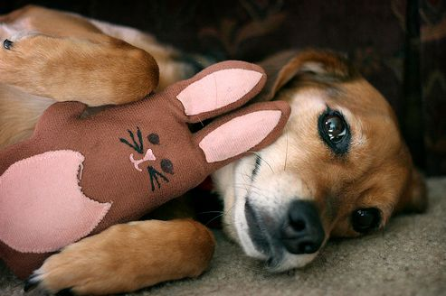 húsvét, kutya, nyúl, játék