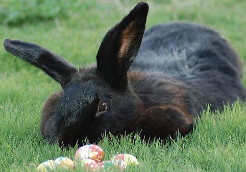 tojás, állat, nyuszi, húsvét