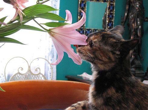 liliom, cica, húsvét