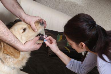 kutya, sérülés, homeopátia