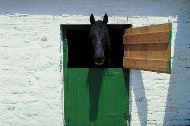 lovas, baleset, homeopátia