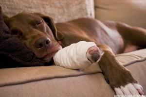 Balesetek, sérülések, vérzések homeopátiás kezelése