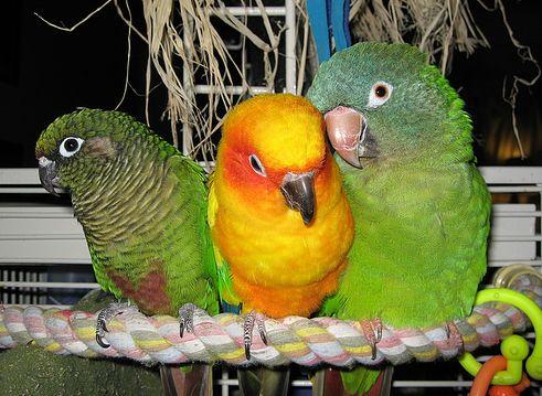 madár, ürülék, kalitka
