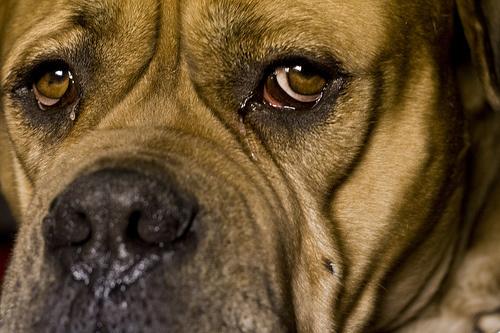kutya tekintet