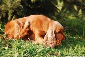 A kutya allergia jelei és tünetei - vegyük komolyan!