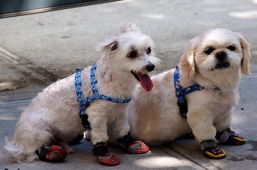 Kutyacipő