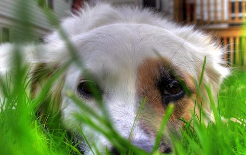 Kutyus a fűben
