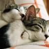 Allergiás és irritáns kontakt dermatitisz kutyáknál, macskáknál