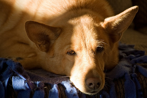 kutyabetegseg