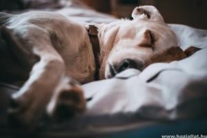 Miről álmodik a kutya? - videóval