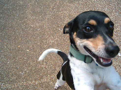 kutya, viselkedés, kutyakölyök