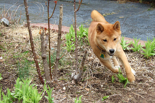 szalad-a-kutya