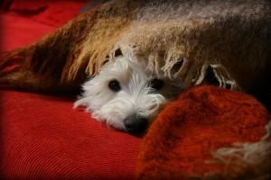 Miért rejtőzködik a kutya?