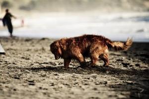 Egy kis etológia: kutya ásás