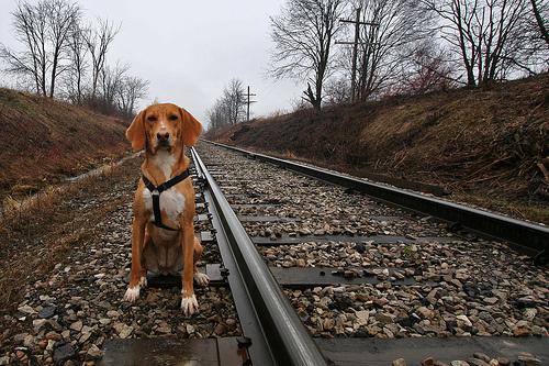 utazas-kutyaval