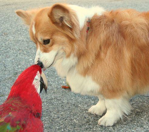 papagáj, kutya, szaglás