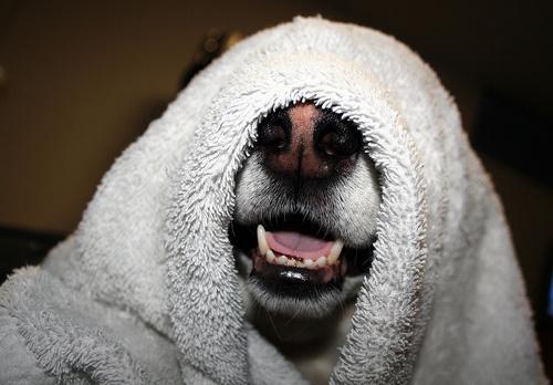 kutya-furdetes