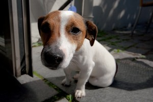 Sugárterápia kutyáknál