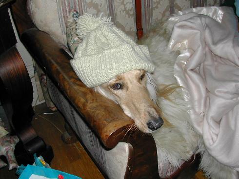 rakos-kutya