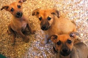 Kutyatenyésztők: bicegő kiskutya az alomban