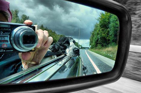 autozas-kutyaval