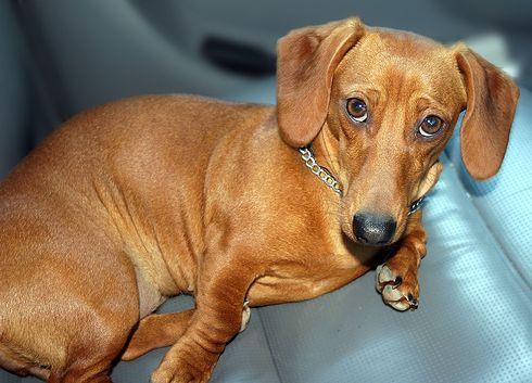 kutya-autoban