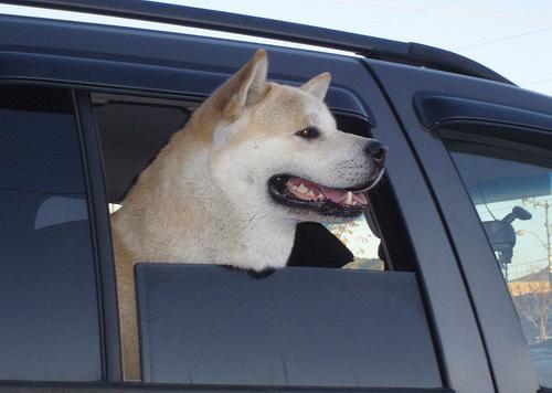 kutya-az-ablakban-kep