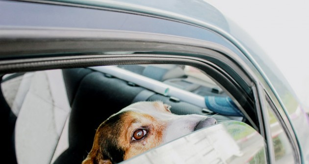 Hogyan szoktassuk a félős kutyát az autózáshoz?