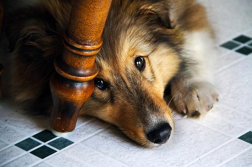 Alázatos kutyus