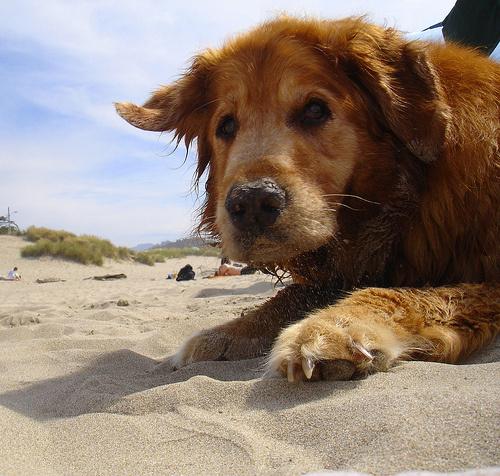 kutyus-a-homokban