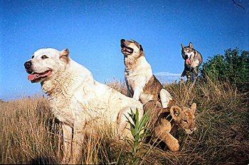kutyak-es-oroszlankolyok