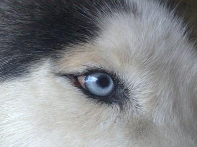 kutyaszem