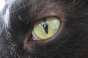 Az állat szeme - egy kis anatómia