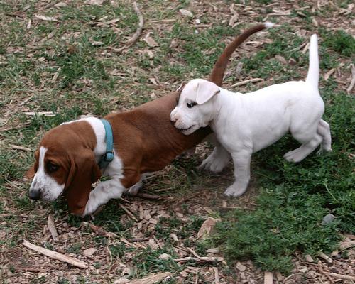 bassed-hound-kutyus
