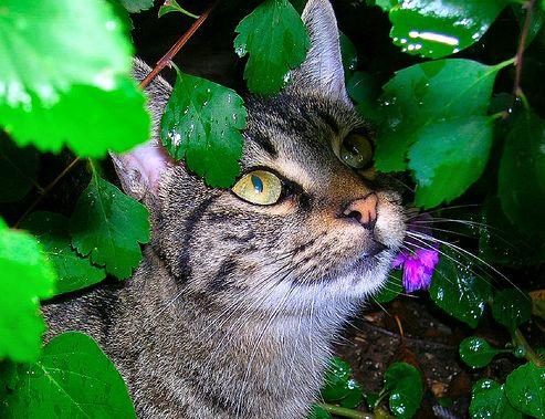 cica, macska, tavasz