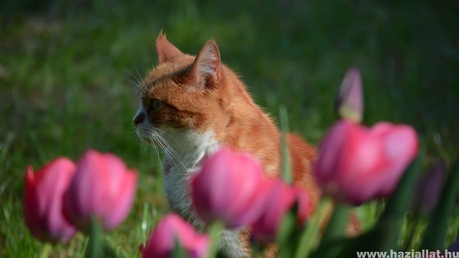 Macskaszerelem - mese egy kamaszodó cicalányról
