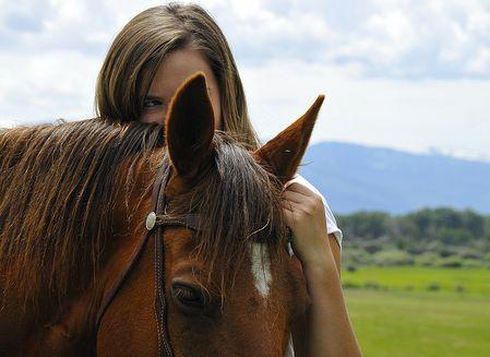 ló, lovas, lovak