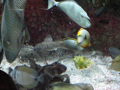 tengeri-akvarium-berendezese