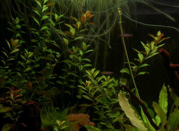 tengeri-akvarium-berendezese-kep