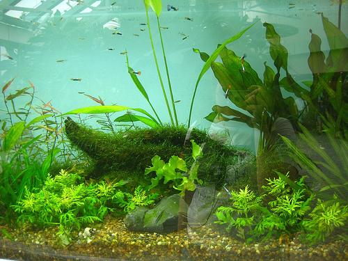 akvarium-karbantartas