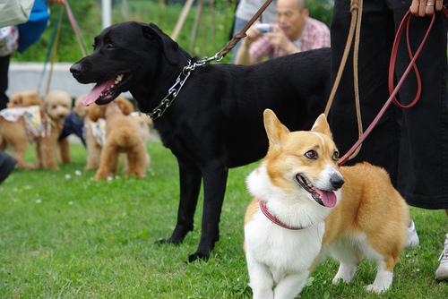 Kutyaverseny