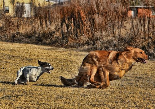 Szaladó kutyák