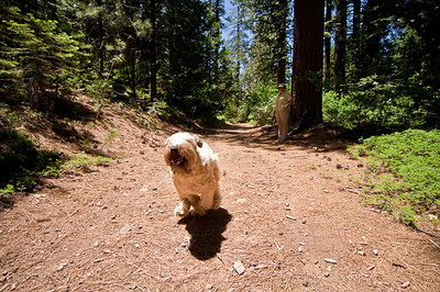 szalado-kutyus
