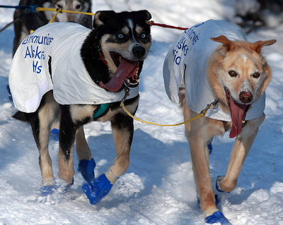 reumas-kutyak