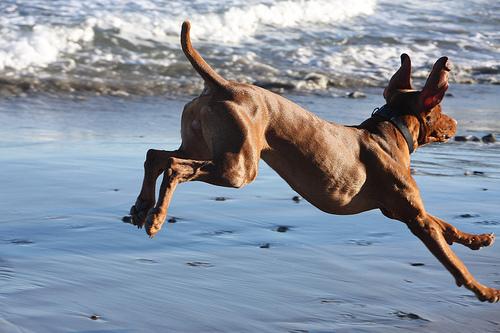sportolo-kutya