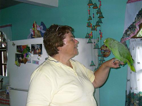 Okos papagáj